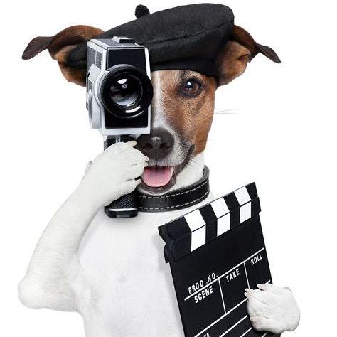 VideoStudio SELFIE - Видеооператор , Одесса,