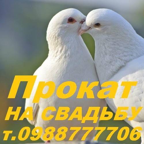 Артём Веребейчик - Ведущий или тамада Певец  - Чернигов - Черниговская область photo