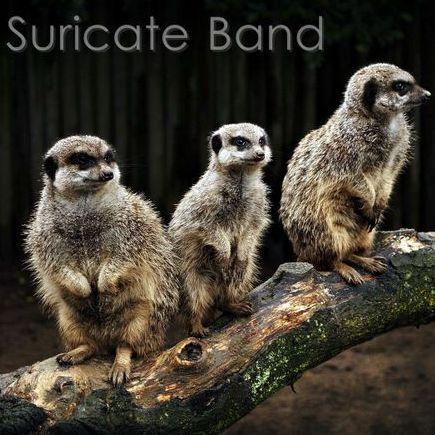 Suricate Band - Музыкальная группа , Запорожье,  Кавер группа, Запорожье Поп группа, Запорожье Хиты, Запорожье