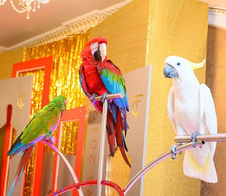 Шоу попугаев - Оригинальный жанр или шоу Организация праздников под ключ  - Москва - Московская область photo
