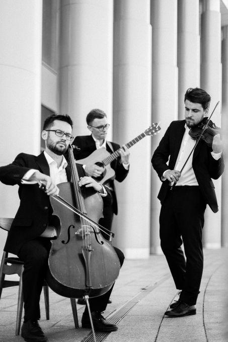 Red Woods Trio - Музыкальная группа Ансамбль  - Киев - Киевская область photo